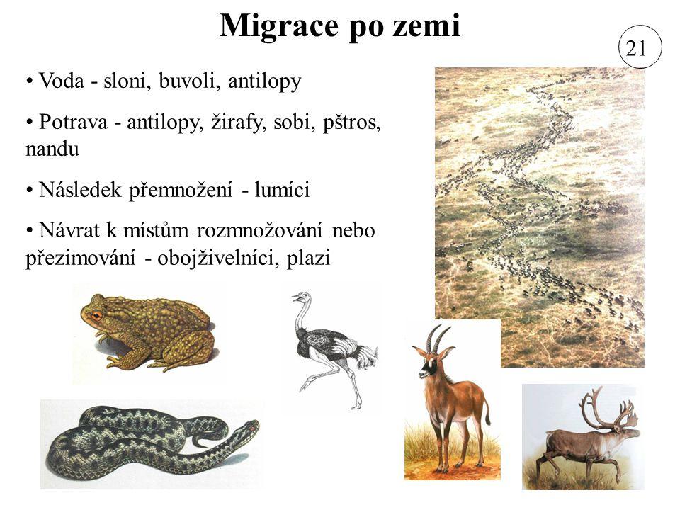 Migrace po zemi Voda - sloni, buvoli, antilopy Potrava - antilopy, žirafy, sobi, pštros, nandu Následek přemnožení - lumíci Návrat k místům rozmnožová