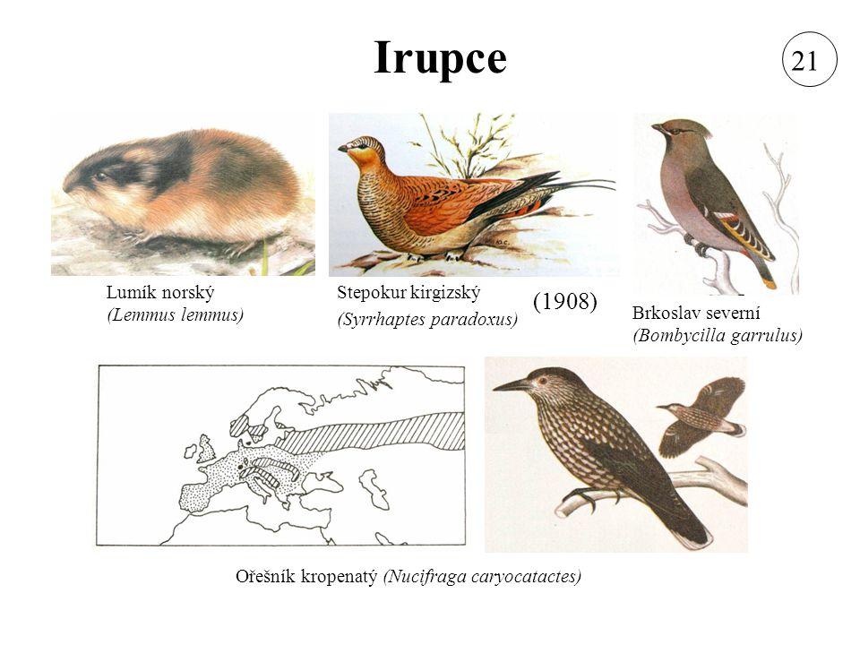 Irupce Lumík norský (Lemmus lemmus) Stepokur kirgizský (Syrrhaptes paradoxus) Brkoslav severní (Bombycilla garrulus) Ořešník kropenatý (Nucifraga cary
