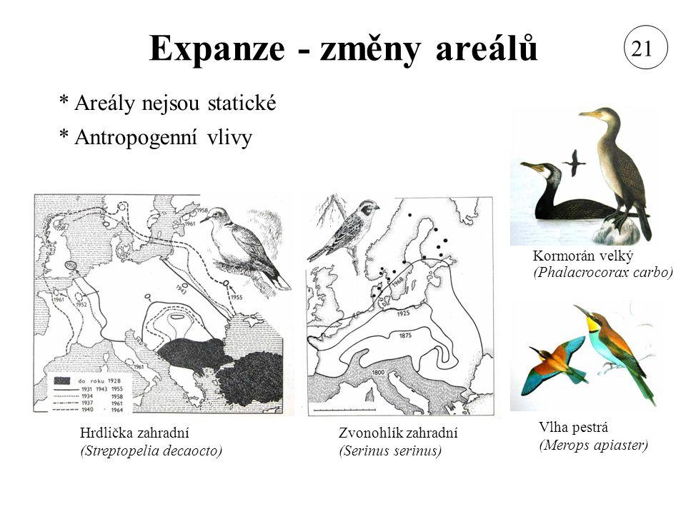 Expanze - změny areálů * Areály nejsou statické * Antropogenní vlivy Hrdlička zahradní (Streptopelia decaocto) Vlha pestrá (Merops apiaster) Kormorán