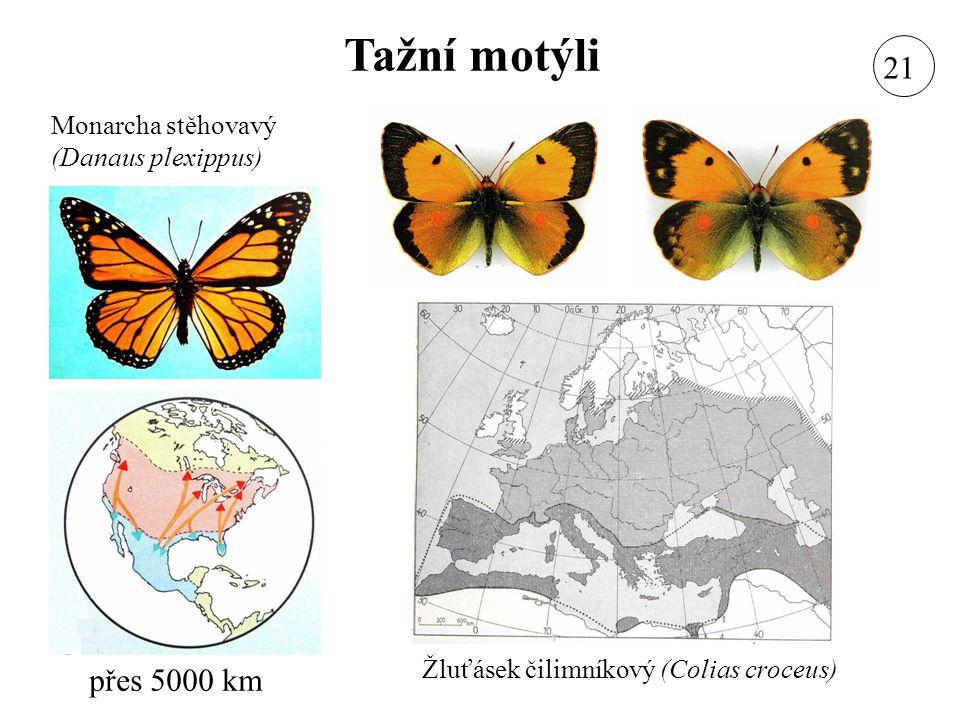 Tažní motýli Modrásek cizokrajný (Lampides boeticus) Lišaj svlačcový (Herse convolvuli) Kovolesklec gama (Autographa gamma) Bělásek rezedkový (Pontia daplidice) Zavíječ stěhovavý (Nomophila noctuella) Lišaj smrtihlav (Acherontia atropos) Babočka admirál (Vanessa atalanta) 21