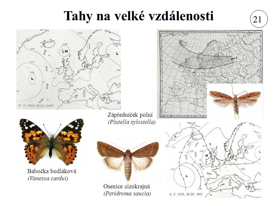 Tahy na velké vzdálenosti Babočka bodláková (Vanessa cardui) Osenice cizokrajná (Peridroma saucia) Zápředníček polní (Plutella xylostella) 21