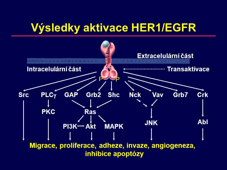 Migrace, proliferace, adheze, invaze, angiogeneza, inhibice apoptózy Výsledky aktivace HER1/EGFR SrcPLC  GAPGrb2ShcNckVavGrb7Crk PKCRas JNK Abl PI3KAkt MAPK Extracelulární část Intracelulární částTransaktivace