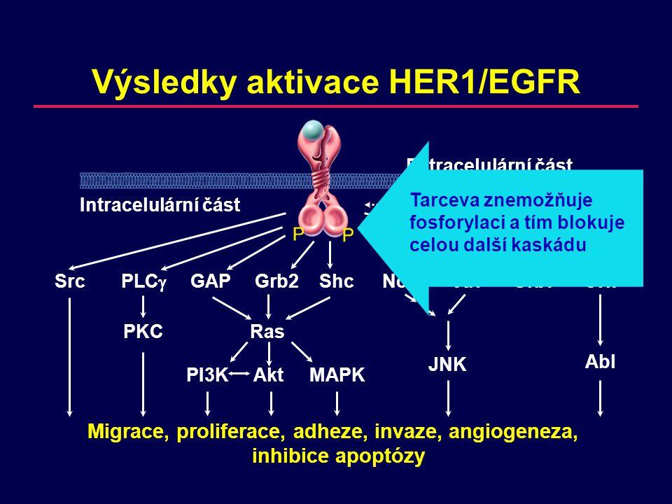 Migrace, proliferace, adheze, invaze, angiogeneza, inhibice apoptózy Výsledky aktivace HER1/EGFR SrcPLC  GAPGrb2ShcNckVavGrb7Crk PKCRas JNK Abl PI3KAkt MAPK Extracelulární část Intracelulární částTransaktivace Tarceva znemožňuje fosforylaci a tím blokuje celou další kaskádu
