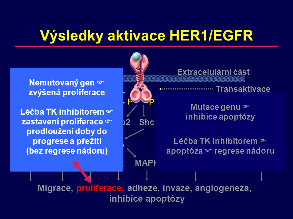 BR.21 – Přežití dle exprese EGFR (IHC) EGFR + EGFR -