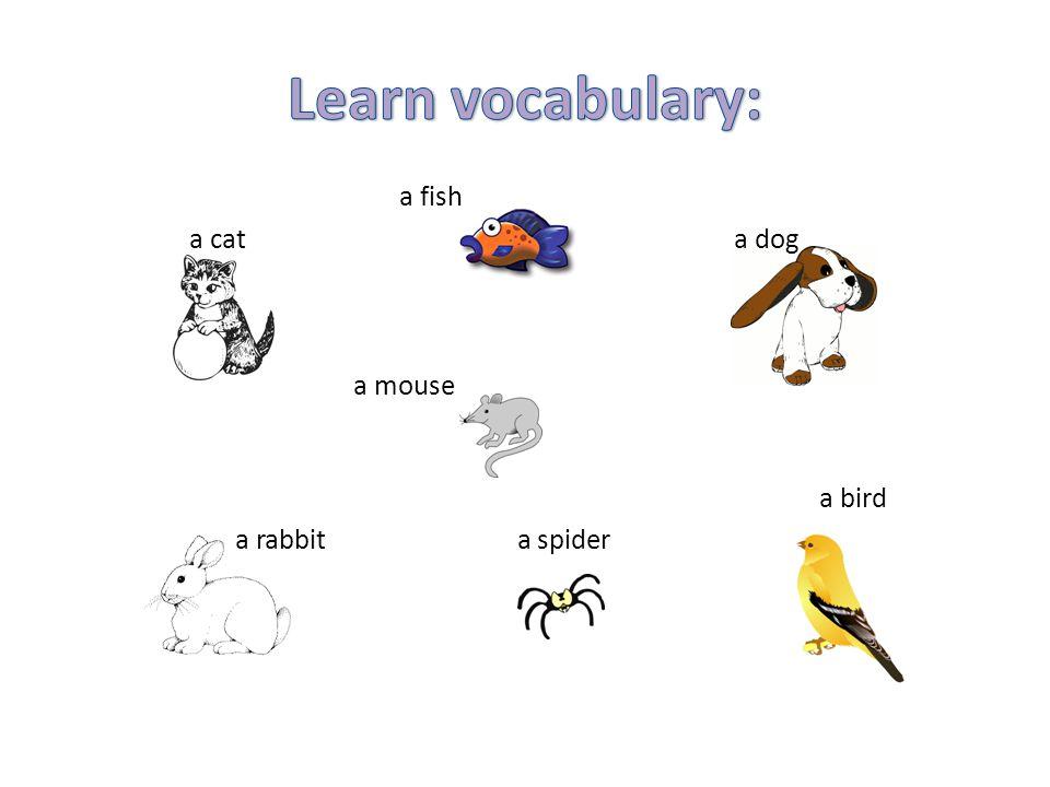 a fish a cat a dog a mouse a bird a rabbit a spider
