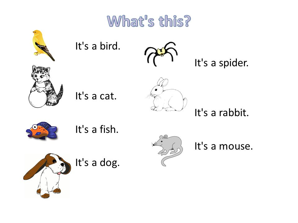 It s a bird. It s a spider. It s a cat. It s a rabbit. It s a fish. It s a mouse. It s a dog.
