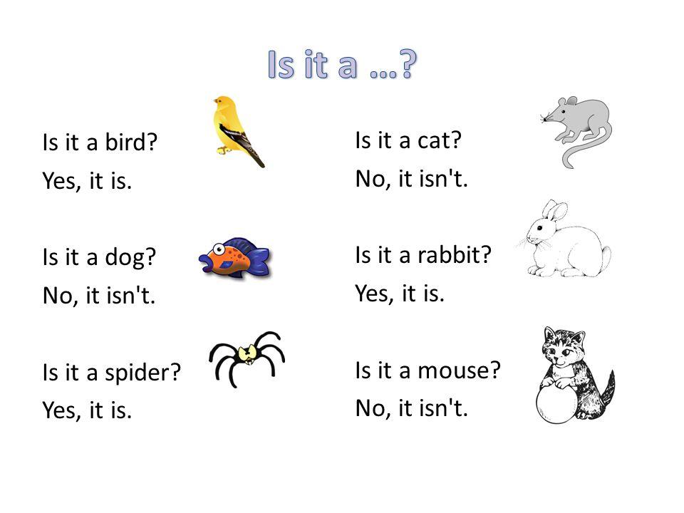 Is it a bird? Yes, it is. Is it a dog? No, it isn't. Is it a spider? Yes, it is. Is it a cat? No, it isn't. Is it a rabbit? Yes, it is. Is it a mouse?
