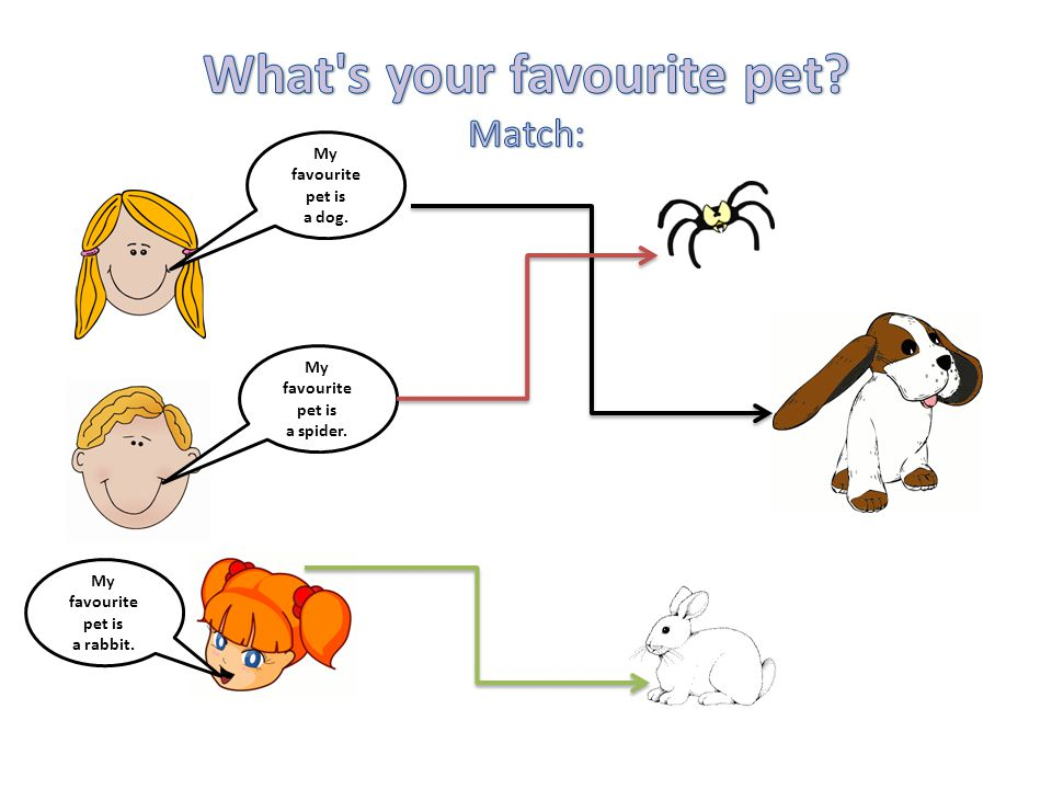 My favourite pet is a dog. My favourite pet is a spider. My favourite pet is a rabbit.