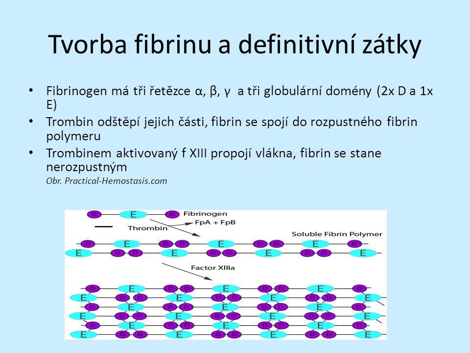 Tvorba fibrinu a definitivní zátky Fibrinogen má tři řetězce α, β, γ a tři globulární domény (2x D a 1x E) Trombin odštěpí jejich části, fibrin se spojí do rozpustného fibrin polymeru Trombinem aktivovaný f XIII propojí vlákna, fibrin se stane nerozpustným Obr.