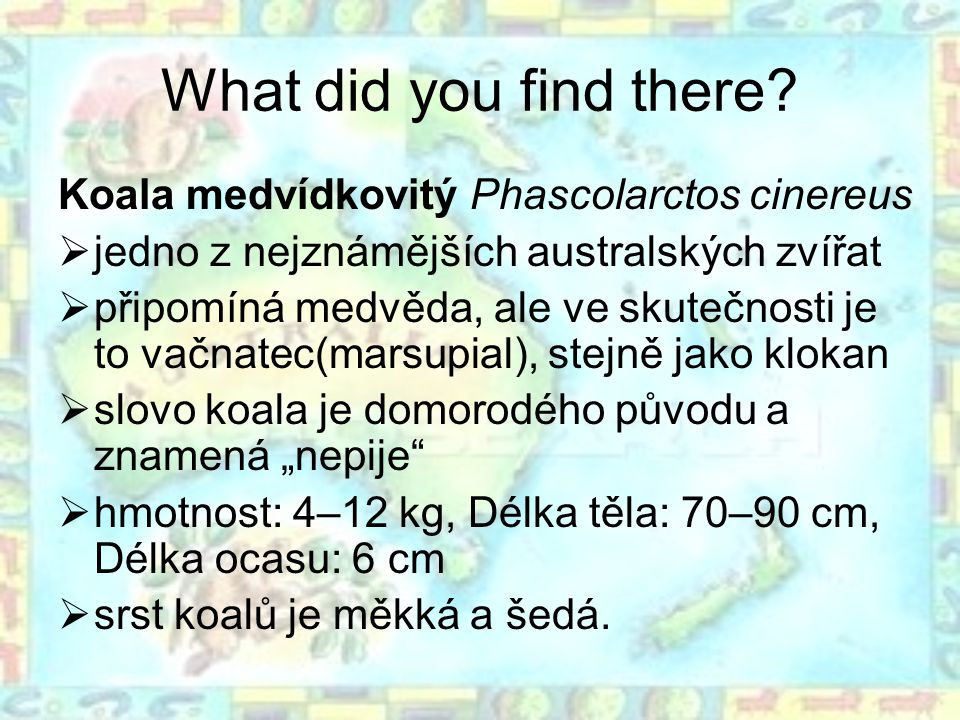 What did you find there? Koala medvídkovitý Phascolarctos cinereus  jedno z nejznámějších australských zvířat  připomíná medvěda, ale ve skutečnosti