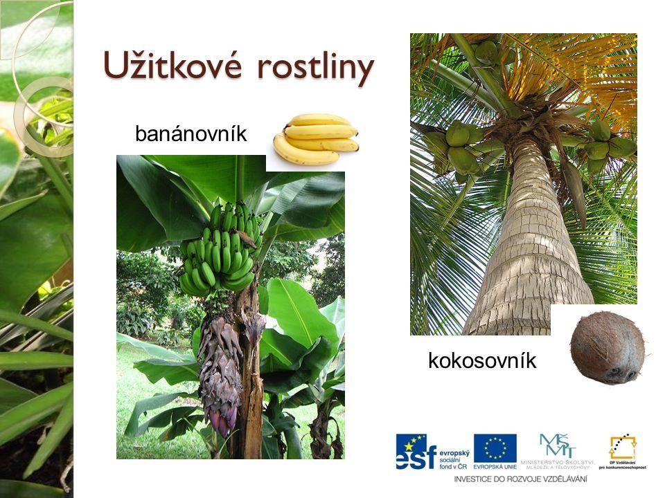 Užitkové rostliny banánovník kokosovník