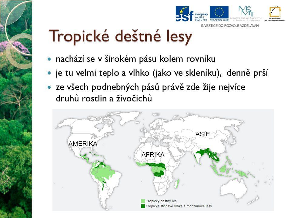 Tropické deštné lesy nachází se v širokém pásu kolem rovníku je tu velmi teplo a vlhko (jako ve skleníku), denně prší ze všech podnebných pásů právě z