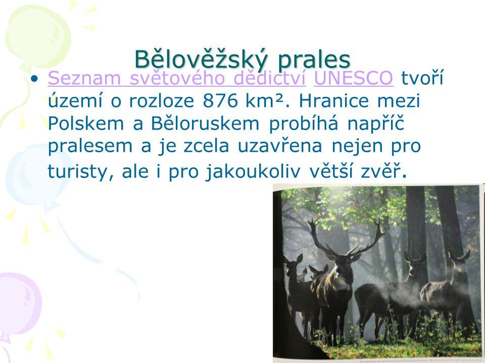 Bělověžský prales Seznam světového dědictví UNESCO tvoří území o rozloze 876 km². Hranice mezi Polskem a Běloruskem probíhá napříč pralesem a je zcela