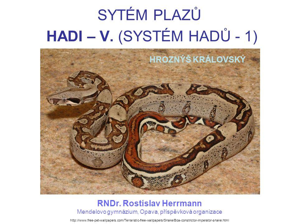 SYSTÉM HADŮ SLEPANOVITÍ Drobní nejedovatí hadi.Život tráví skrytě v podzemí.