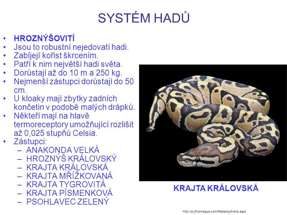 SYSTÉM HADŮ HROZNÝŠOVITÍ Jsou to robustní nejedovatí hadi. Zabíjejí kořist škrcením. Patří k nim největší hadi světa. Dorůstají až do 10 m a 250 kg. N