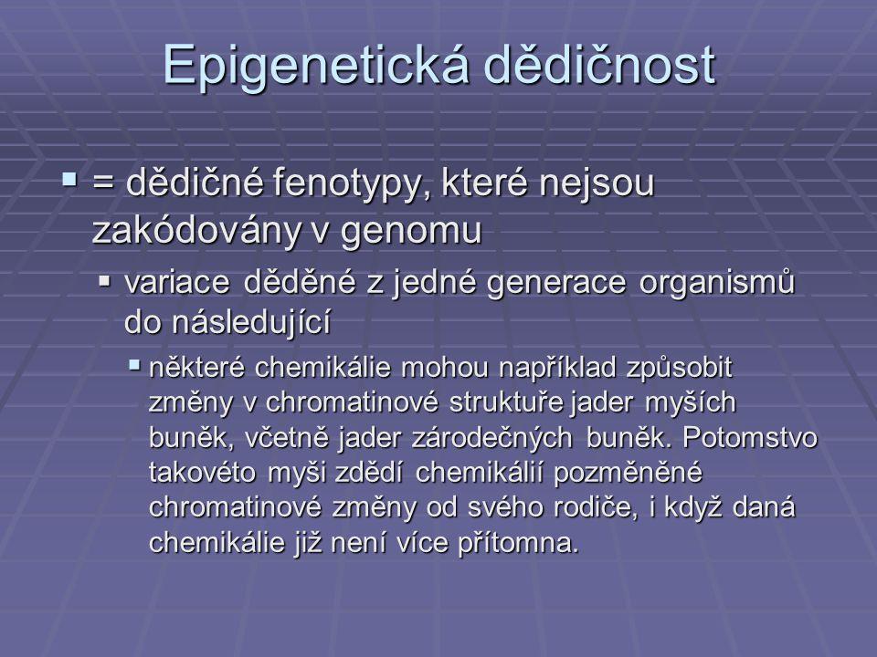 Epigenetická dědičnost  = dědičné fenotypy, které nejsou zakódovány v genomu  variace děděné z jedné generace organismů do následující  některé chemikálie mohou například způsobit změny v chromatinové struktuře jader myších buněk, včetně jader zárodečných buněk.