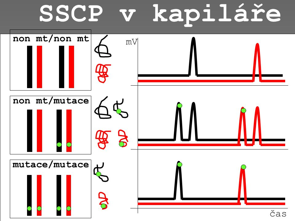 SSCP na gelu (Single-strand conformation polymorphism) non mt/non mtnon mt/mutacemutace/mutace - +