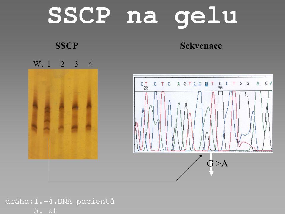 SSCP v kapiláře non mt/non mt non mt/mutace mutace/mutace mV čas