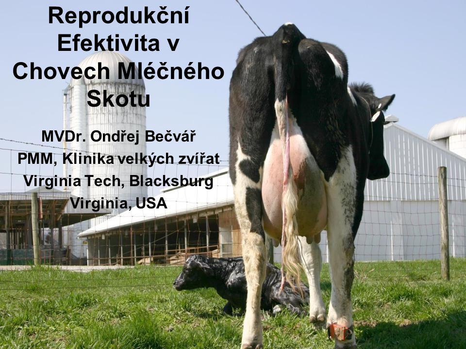 MVDr. Ondřej Bečvář PMM, Klinika velkých zvířat Virginia Tech, Blacksburg Virginia, USA Reprodukční Efektivita v Chovech Mléčného Skotu