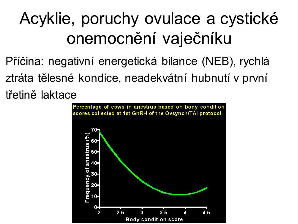 Acyklie, poruchy ovulace a cystické onemocnění vaječníku Příčina: negativní energetická bilance (NEB), rychlá ztráta tělesné kondice, neadekvátní hubn