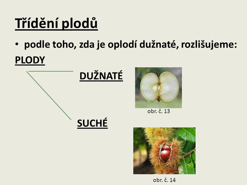 DUŽNATÉ PLODY  malvice  peckovice  bobule obr.č.