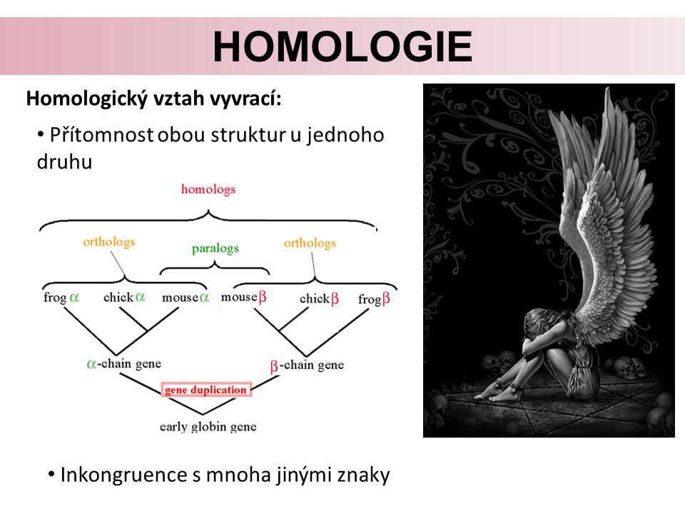 HOMOLOGIE Homologický vztah vyvrací: Přítomnost obou struktur u jednoho druhu Inkongruence s mnoha jinými znaky