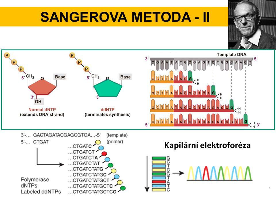 SANGEROVA METODA - II G GG G Kapilární elektroforéza
