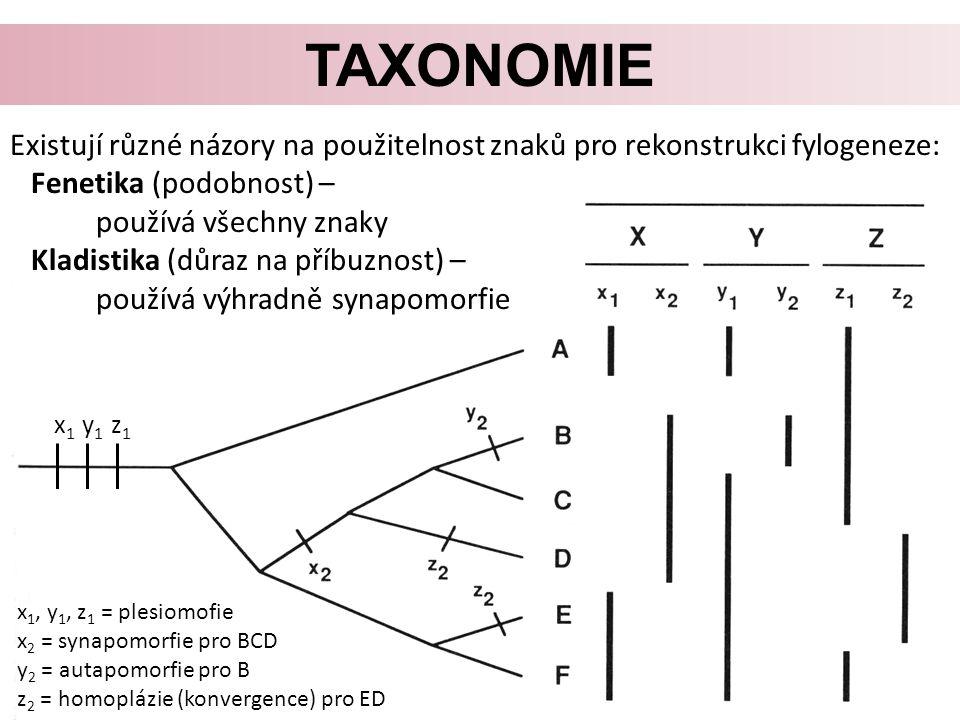 TAXONOMIE Existují různé názory na použitelnost znaků pro rekonstrukci fylogeneze: Fenetika (podobnost) – používá všechny znaky Kladistika (důraz na příbuznost) – používá výhradně synapomorfie x 1, y 1, z 1 = plesiomofie x 2 = synapomorfie pro BCD y 2 = autapomorfie pro B z 2 = homoplázie (konvergence) pro ED x 1 y 1 z 1