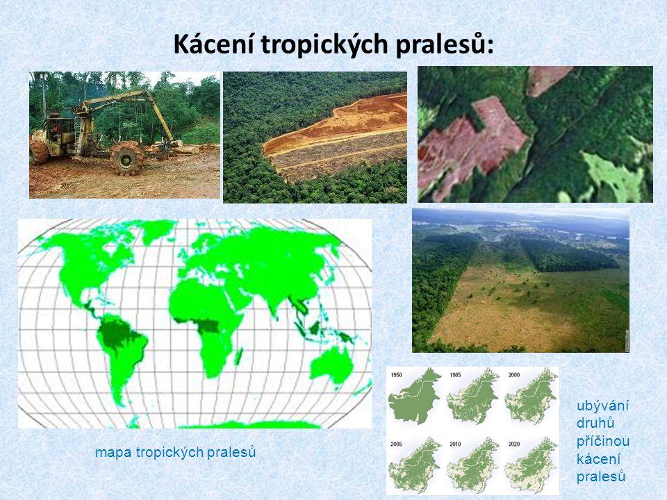 Kácení tropických pralesů: mapa tropických pralesů ubývání druhů příčinou kácení pralesů