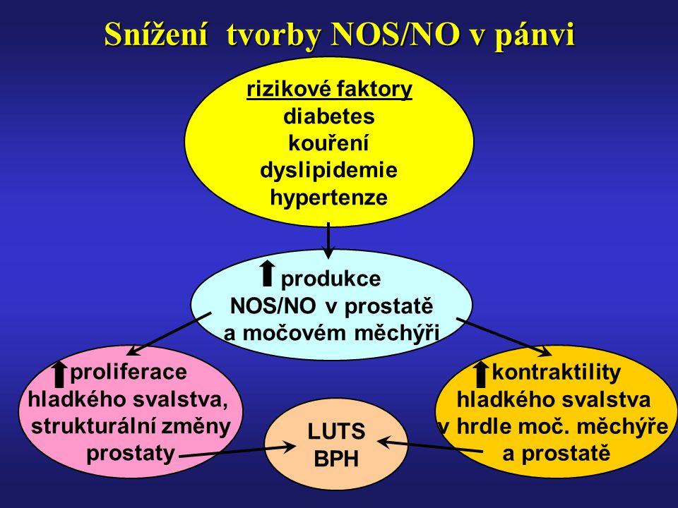 Snížení tvorby NOS/NO v pánvi rizikové faktory diabetes kouření dyslipidemie hypertenze produkce NOS/NO v prostatě a močovém měchýři kontraktility hladkého svalstva v hrdle moč.