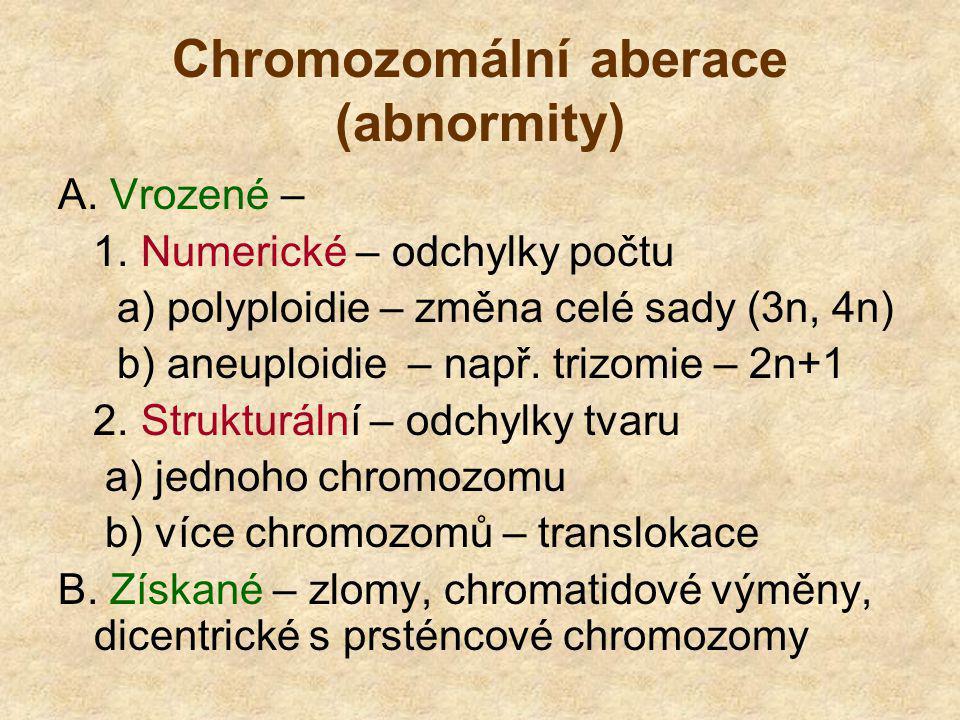 Chromozomální aberace (abnormity) A. Vrozené – 1. Numerické – odchylky počtu a) polyploidie – změna celé sady (3n, 4n) b) aneuploidie – např. trizomie