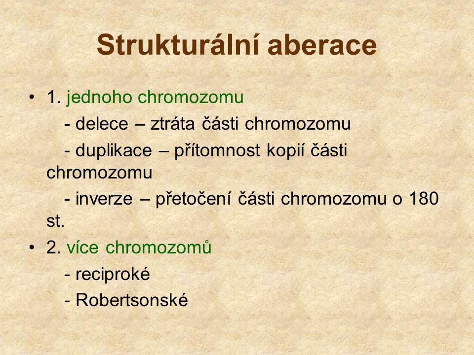 Strukturální aberace 1. jednoho chromozomu - delece – ztráta části chromozomu - duplikace – přítomnost kopií části chromozomu - inverze – přetočení čá
