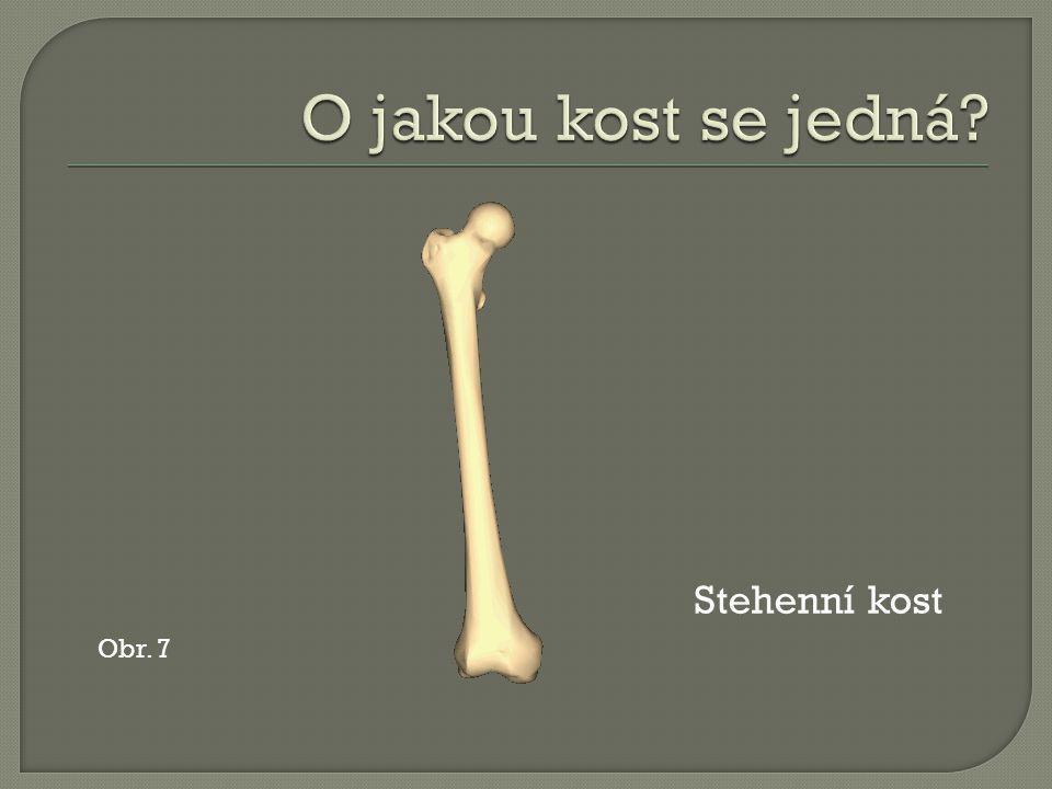 Obr. 7 Stehenní kost