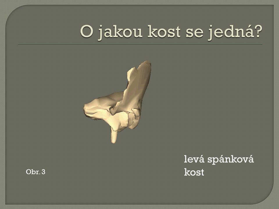 Obr. 3 levá spánková kost