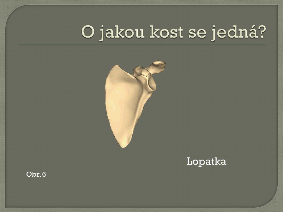 Obr. 6 Lopatka