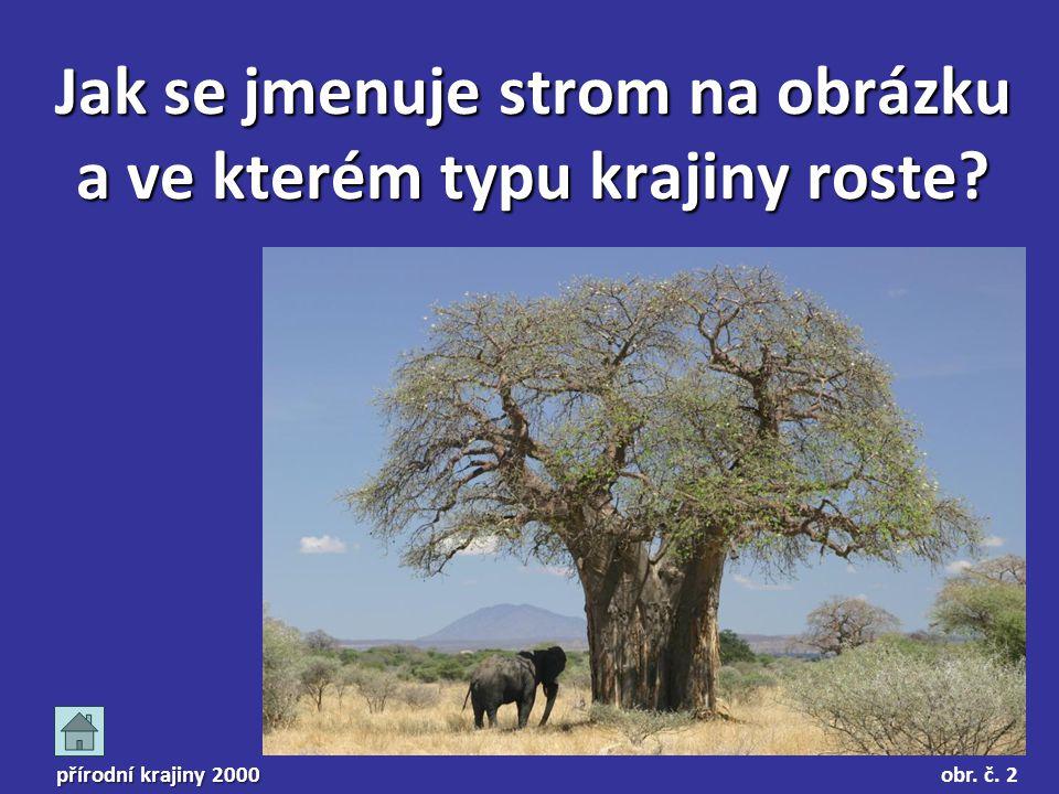 Jak se jmenuje strom na obrázku a ve kterém typu krajiny roste? přírodní krajiny 2000 obr. č. 2