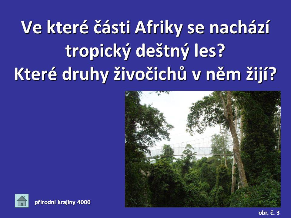 Ve které části Afriky se nachází tropický deštný les.