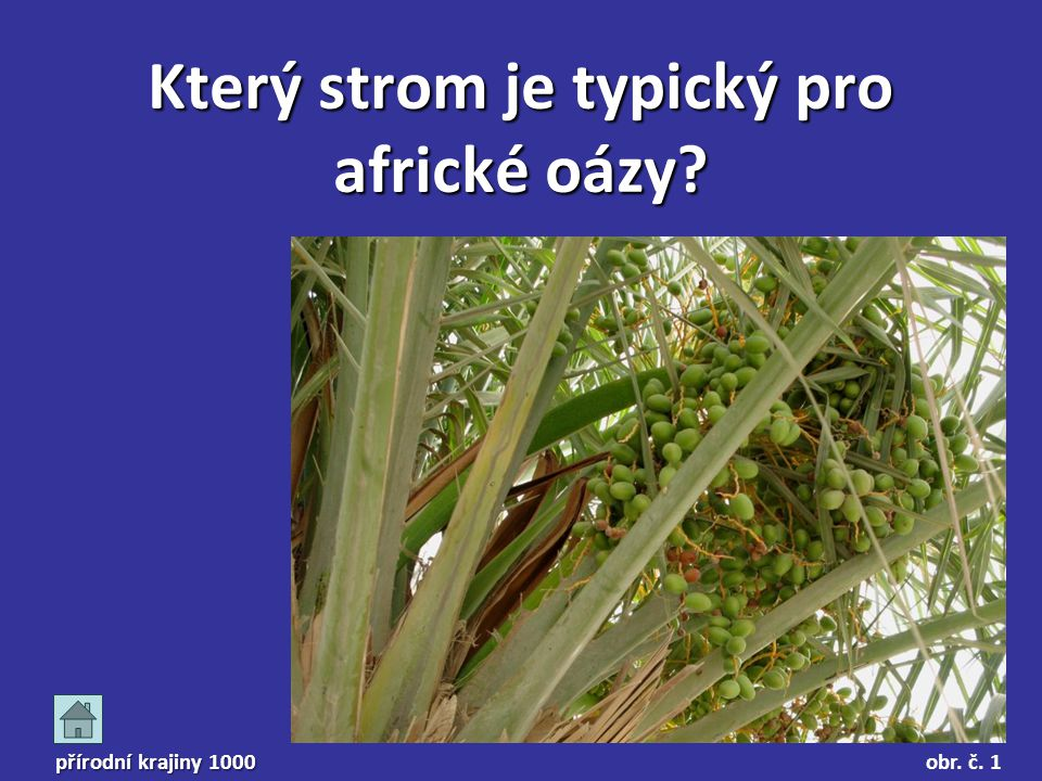 přírodní krajiny 1000 Který strom je typický pro africké oázy? obr. č. 1