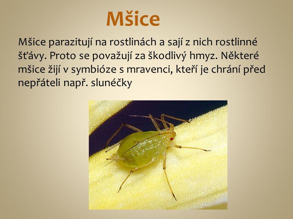 Mšice parazitují na rostlinách a sají z nich rostlinné šťávy. Proto se považují za škodlivý hmyz. Některé mšice žijí v symbióze s mravenci, kteří je c