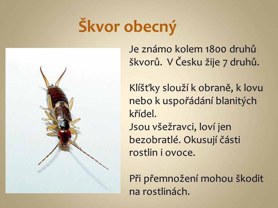 Je známo kolem 1800 druhů škvorů. V Česku žije 7 druhů. Klíšťky slouží k obraně, k lovu nebo k uspořádání blanitých křídel. Jsou všežravci, loví jen b