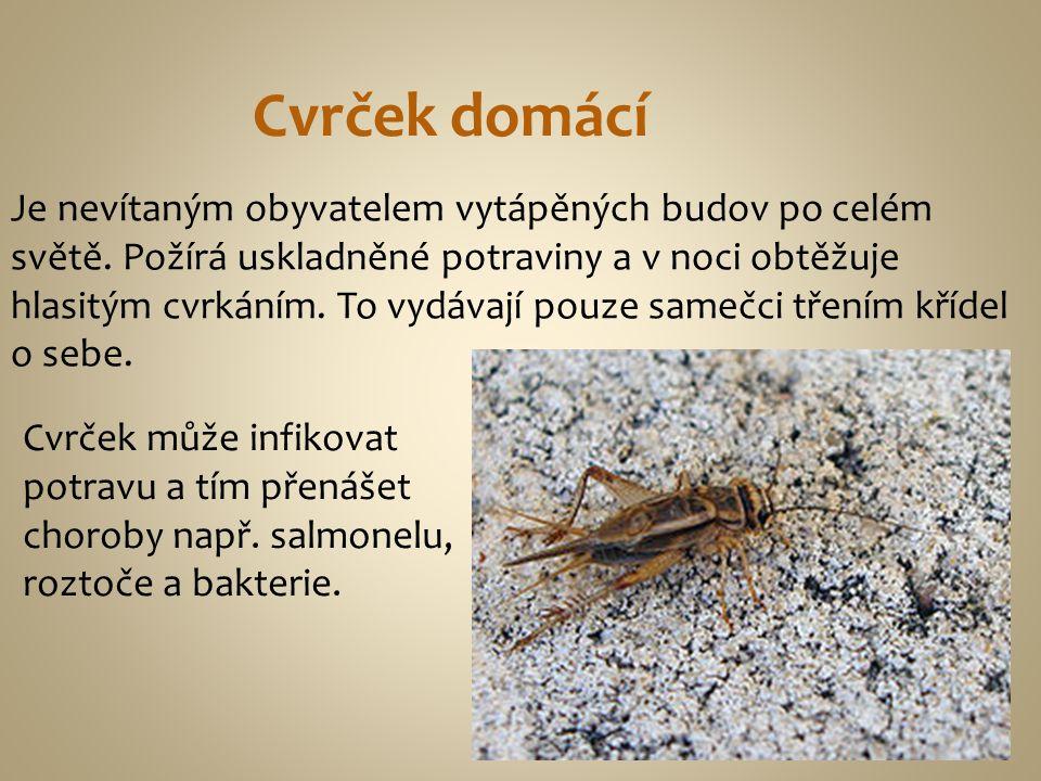 Cvrček domácí Je nevítaným obyvatelem vytápěných budov po celém světě. Požírá uskladněné potraviny a v noci obtěžuje hlasitým cvrkáním. To vydávají po