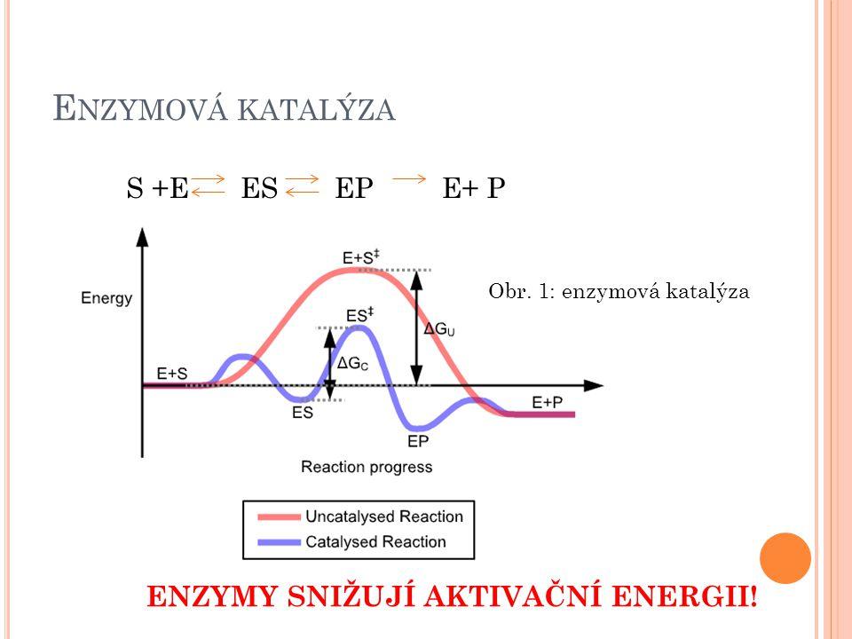 E NZYMOVÁ KATALÝZA S +EESEPE+ P ENZYMY SNIŽUJÍ AKTIVAČNÍ ENERGII! Obr. 1: enzymová katalýza