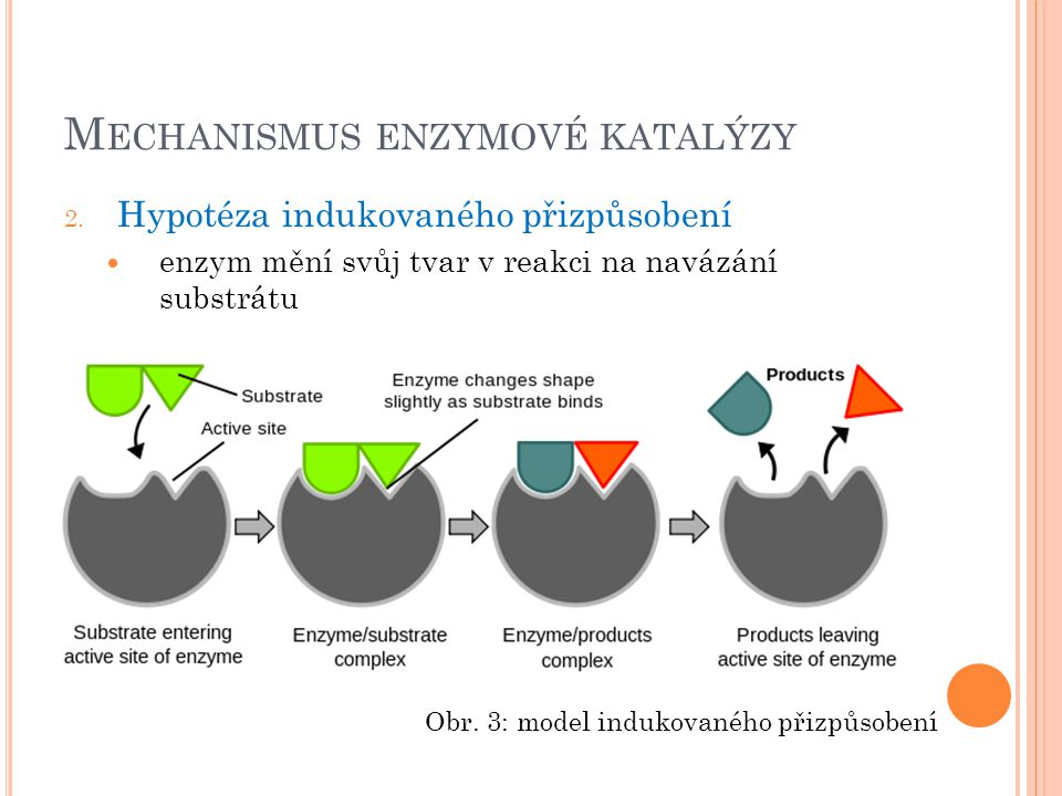 M ECHANISMUS ENZYMOVÉ KATALÝZY 2.