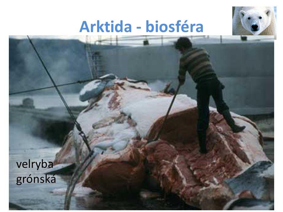 Arktida - biosféra velryba grónská