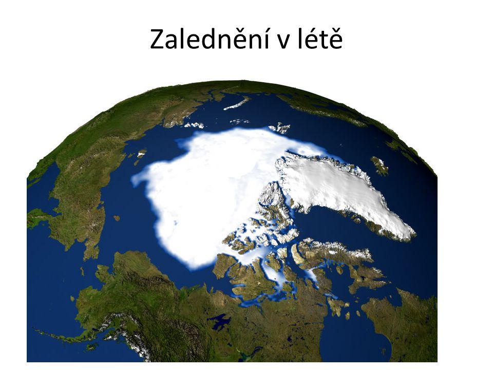 Arktida - biosféra mroži