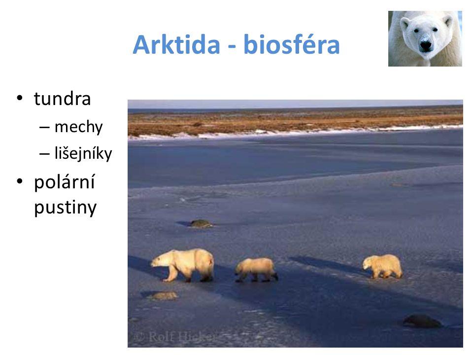 Arktida - biosféra tundra – mechy – lišejníky polární pustiny
