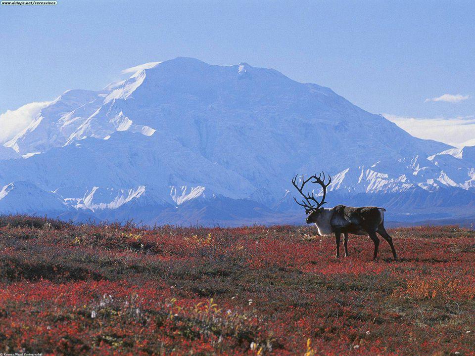 Arktida - obyvatelstvo Inuité = Eskymáci příchod z Asie před 12 000 lety Laponci = Saamové Aleuté Čukčové