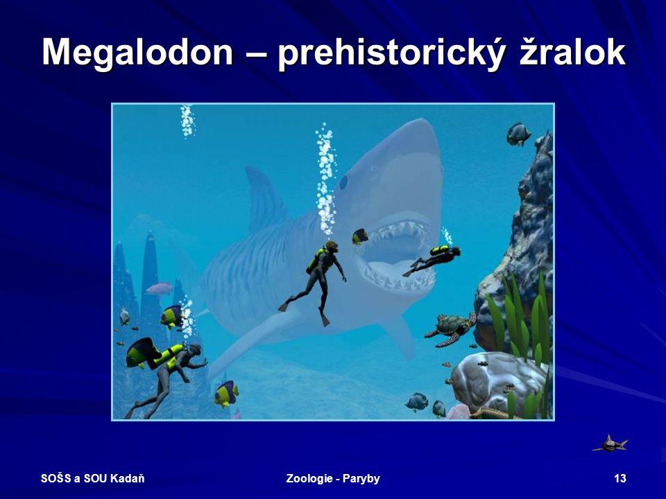 SOŠS a SOU Kadaň Zoologie - Paryby 13 Megalodon – prehistorický žralok