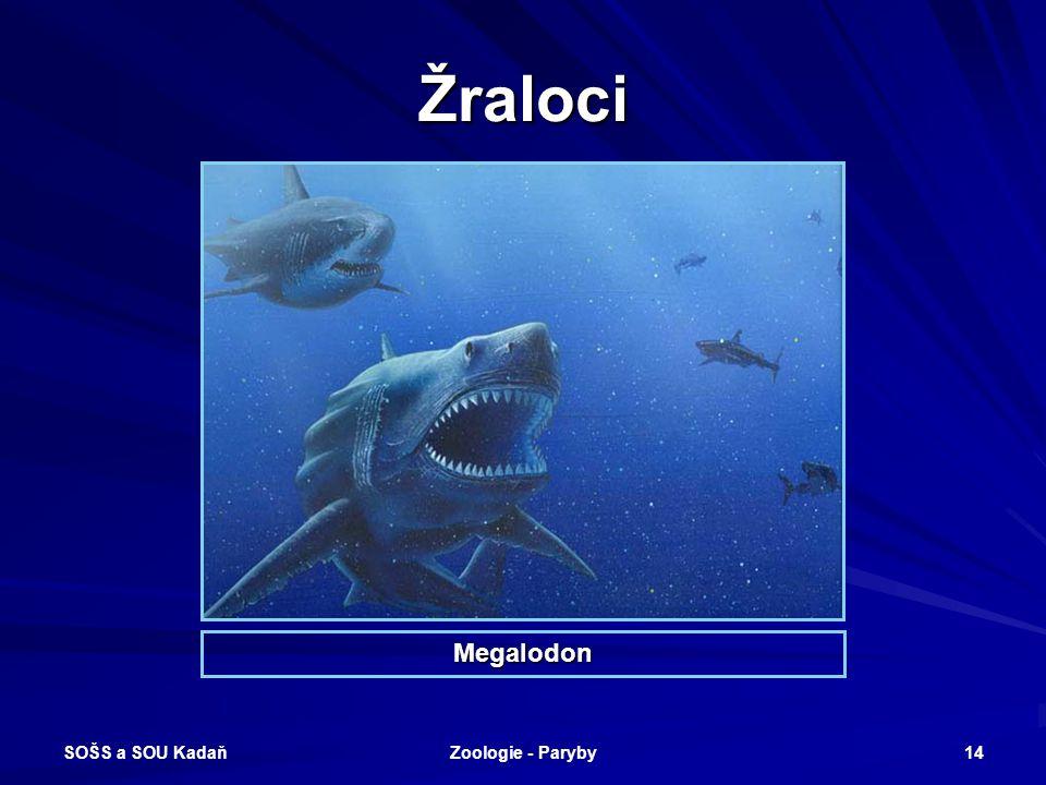 SOŠS a SOU Kadaň Zoologie - Paryby 14 Žraloci Megalodon