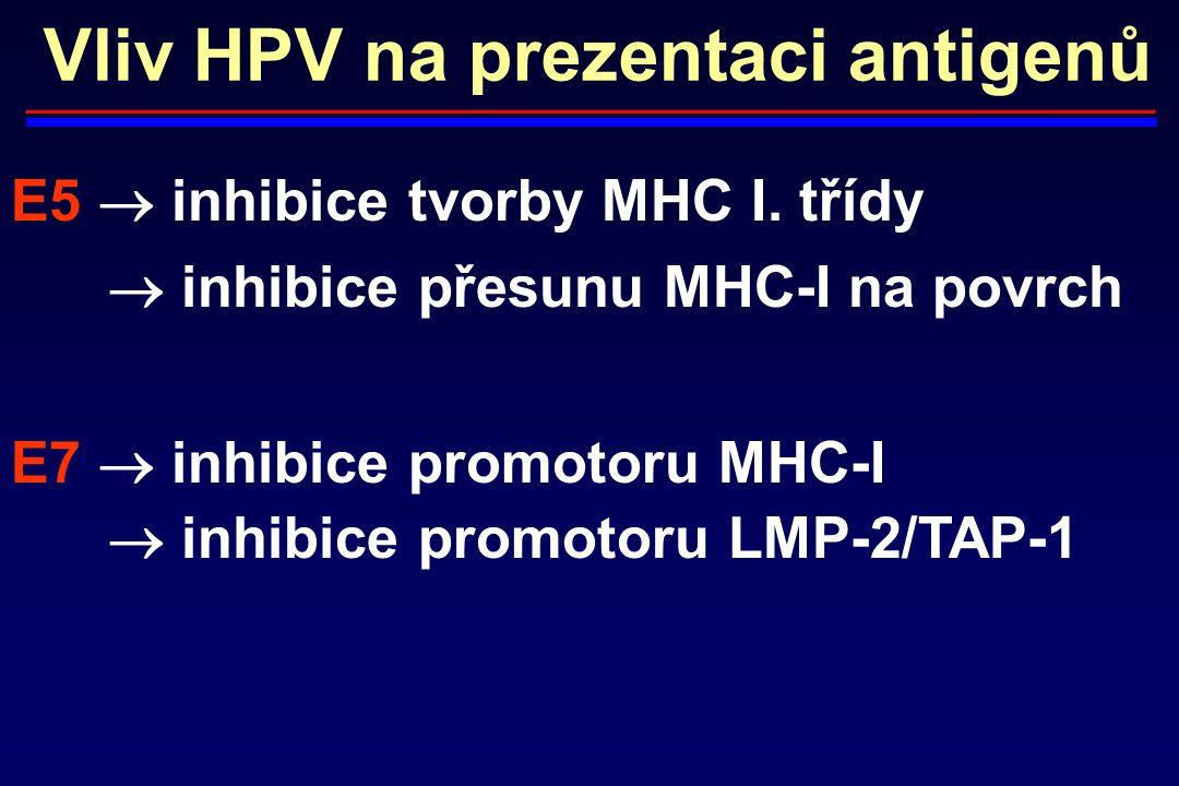 Vliv HPV na prezentaci antigenů E5  inhibice tvorby MHC I. třídy  inhibice přesunu MHC-I na povrch E7  inhibice promotoru MHC-I  inhibice promotor